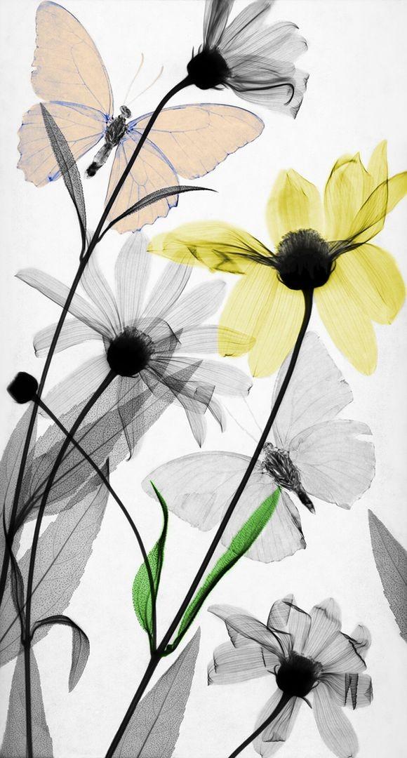 Arie van t Riet - Helianthus tuberose - Butterflies