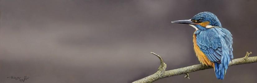 Walter Elst | Mannetje ijsvogel in rust