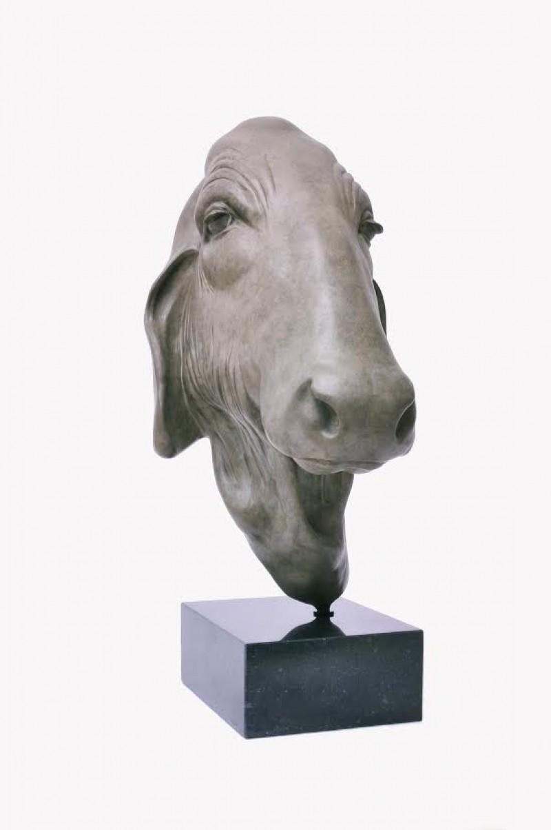 Renee Marcus Janssen - Aziatische koe