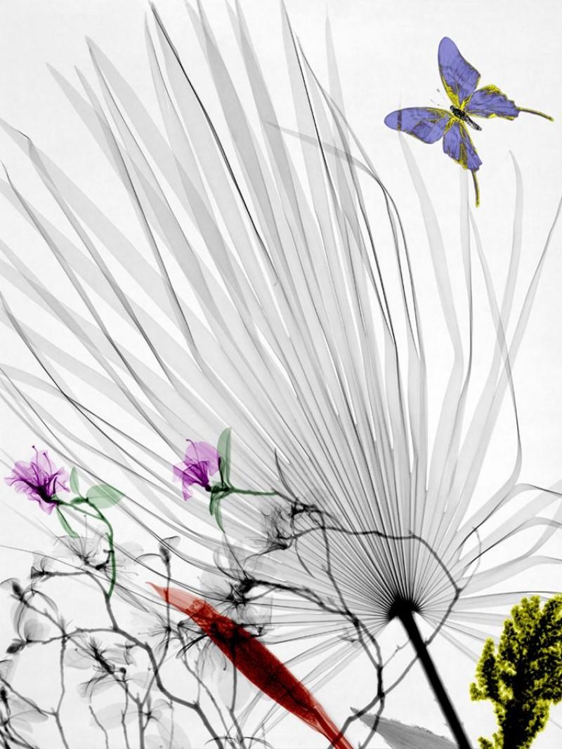 Arie van t Riet - Chamaerops humilis Azalea Butterfly