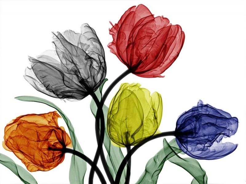 Arie van t Riet - Parrot Tulips