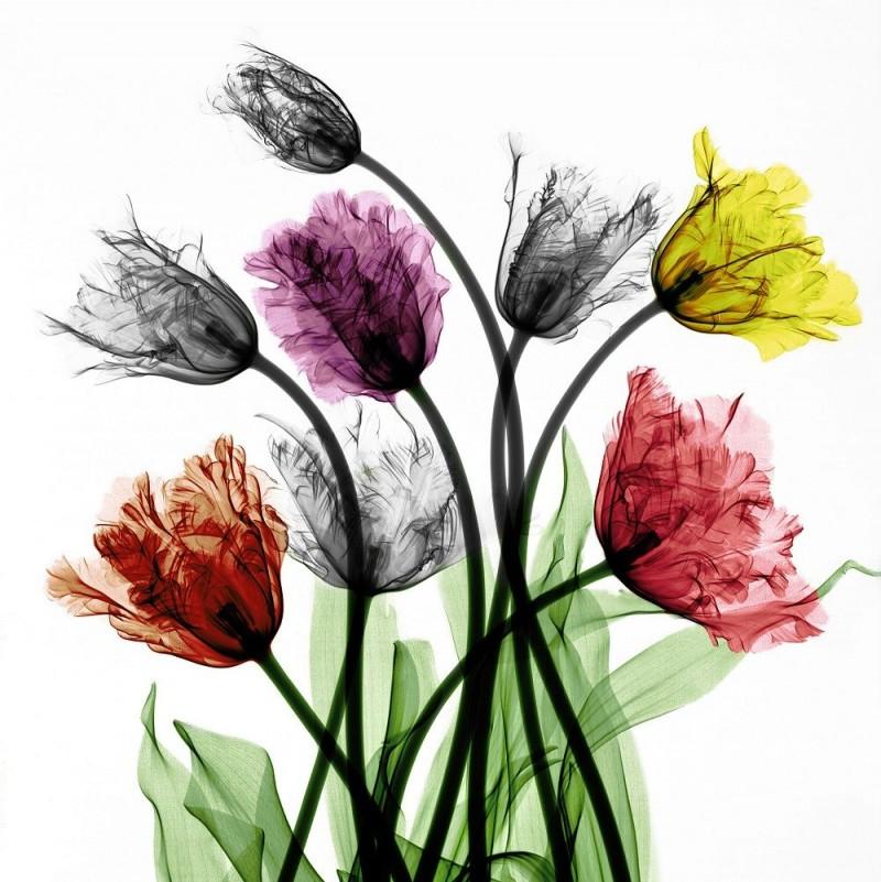 Arie van t Riet - Franse Tulpen