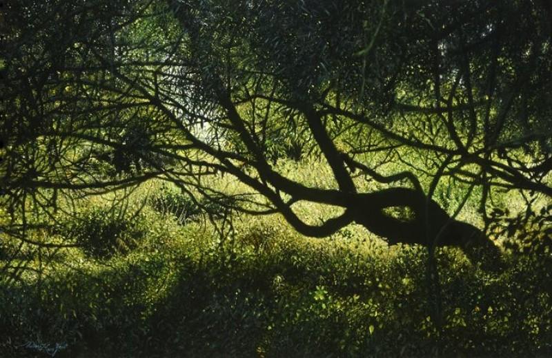 Walter Elst - Midsummer shadow