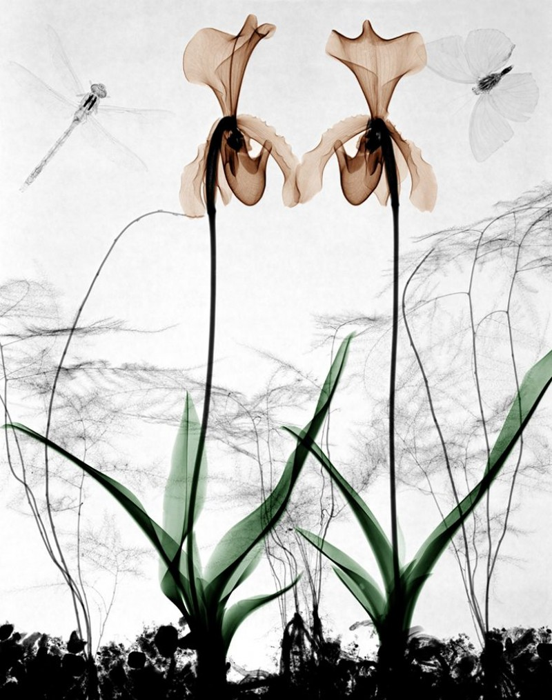 Arie van t Riet - Orchids