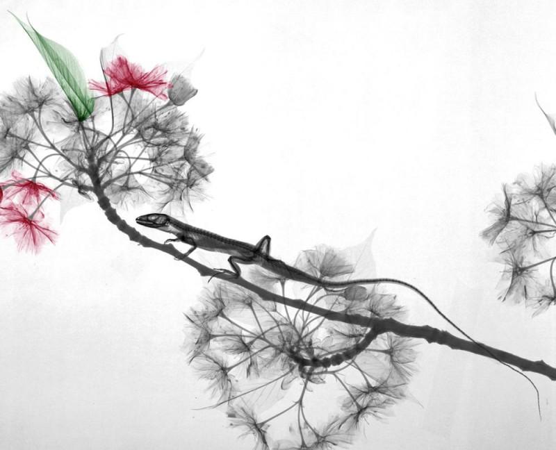 Arie van t Riet - Lizard Prunus