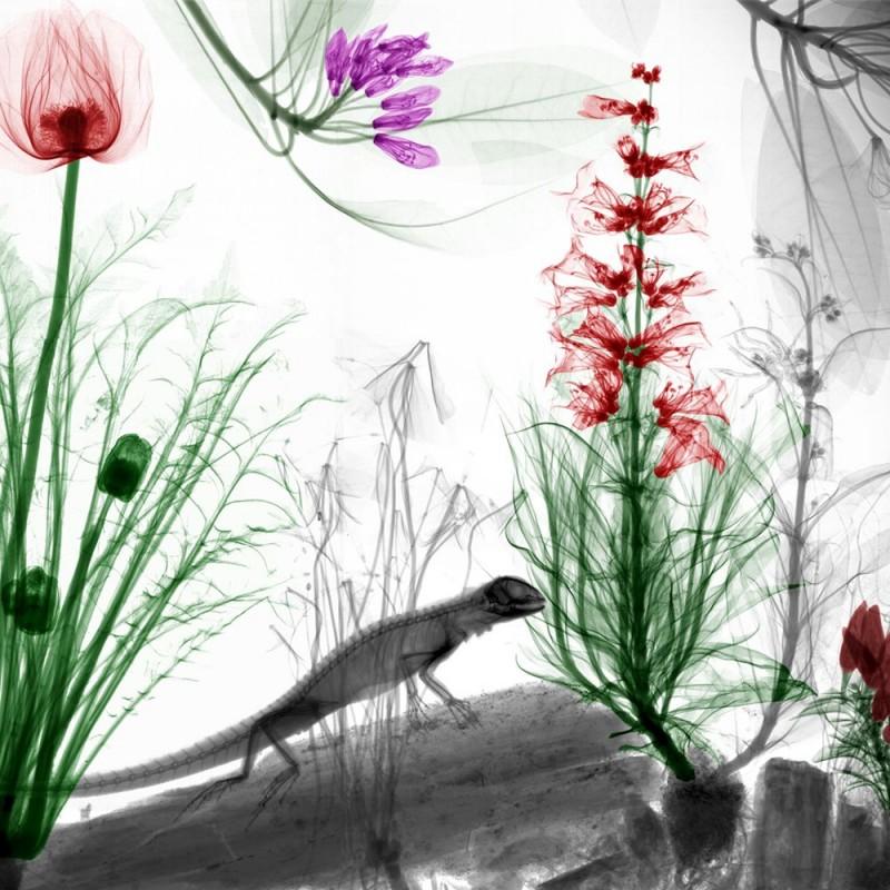 Arie van t Riet - Lizard Poppy