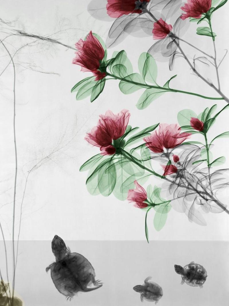 Arie van t Riet - Turtles - Trachycarpus - Azalea
