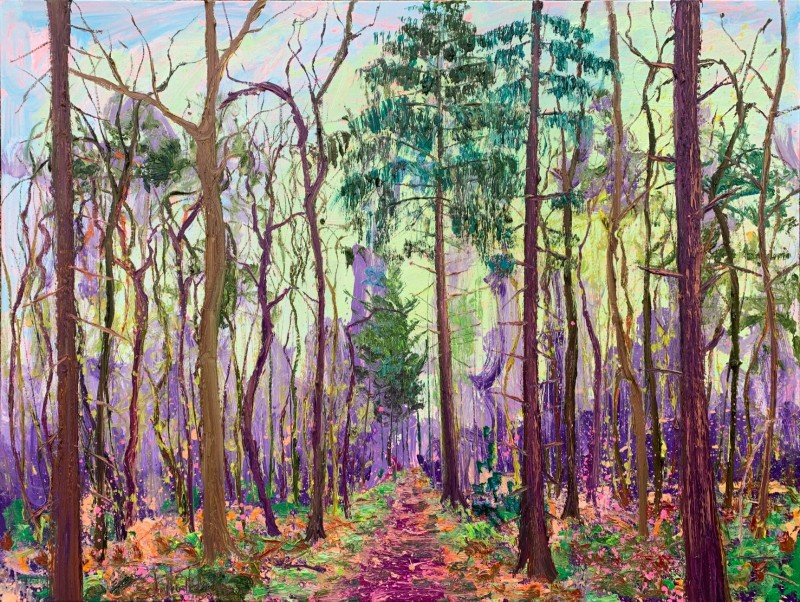 Gertjan Scholte-Albers - Big Dutch forest