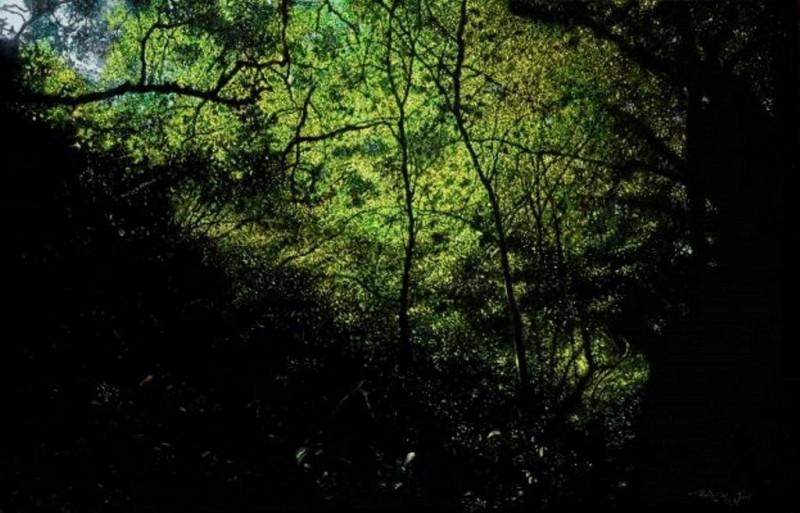 Walter Elst - De betovering van het bos