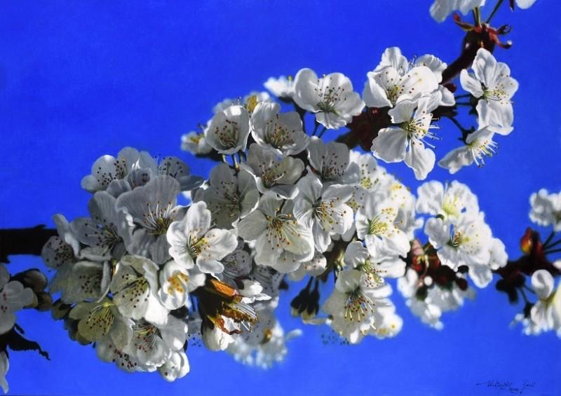 Walter Elst - Heavenly Spring