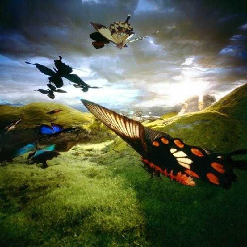 Bethany de Forest - Vlindertrek 2